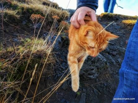 We met this cat behind a seafood restaurant