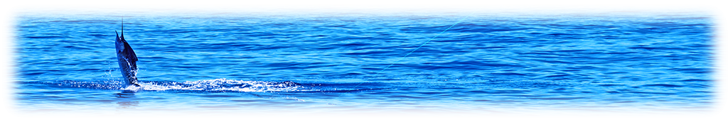 Jumping Sailfish Banner