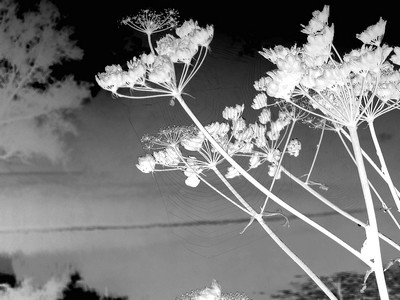 5 daagse zwart / wit fotografie challege