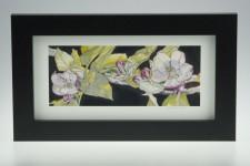 'Apple blossom on Umber'