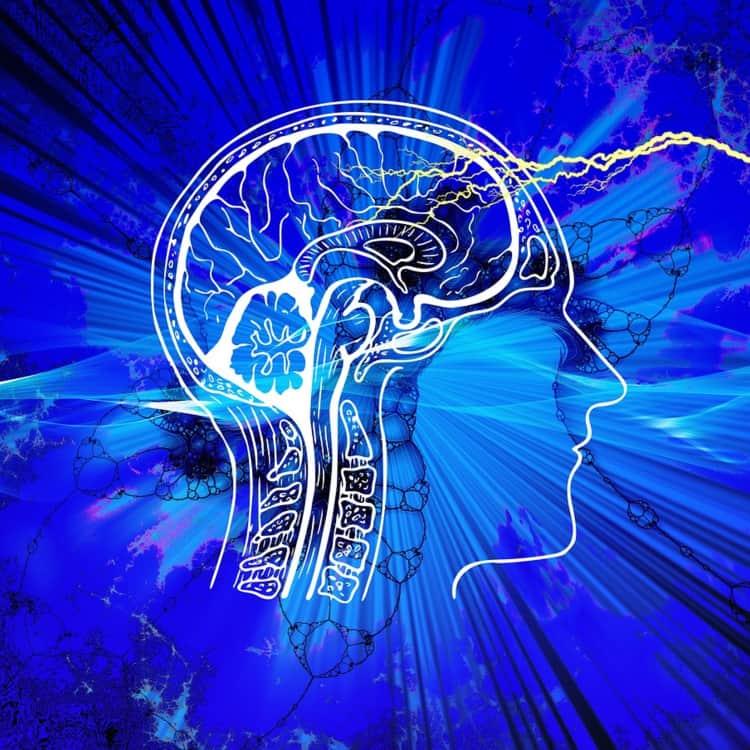 The Brain 10