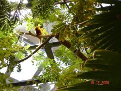 Un singe, Biodôme de Montréal 2006.