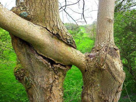 fused trees1
