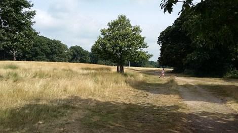 Dog walking in Richmond Park