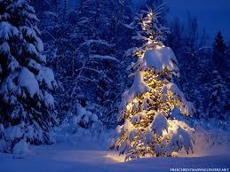 131227 Árbol de Navidad