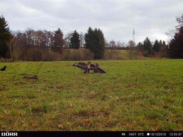 DÖRR Wildkamera 5G - 14 bei Jagdabsehen