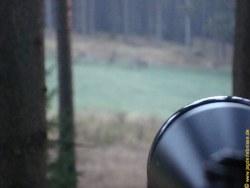 Jagd auf den Rothirsch