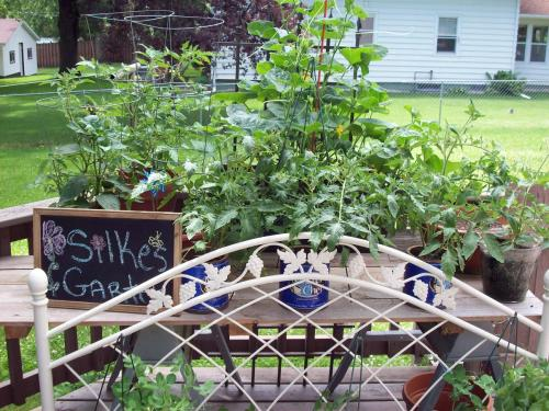 Silke's Garden in July