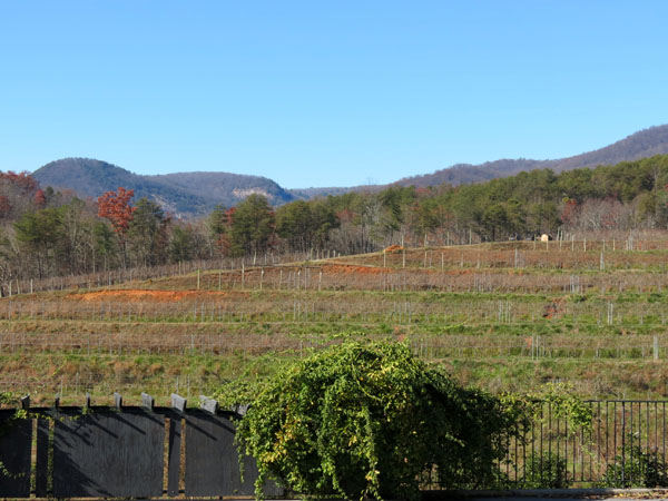 Victoria Valley Vineyard SC