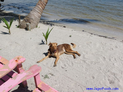 Living off the grid in Belize