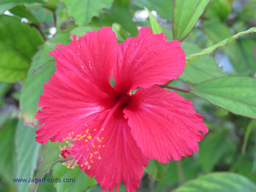 Live in Belize, A Flower Haven