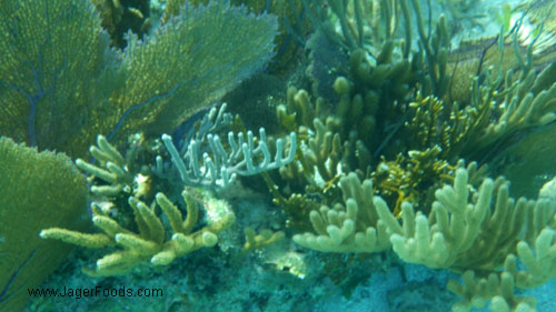 Pentax Camera Review - Beautiful underwater shots on the first try.