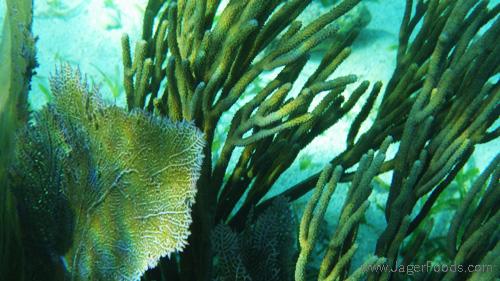 Underwater Reef in Belize