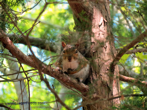Squirrel Lake Wateree State