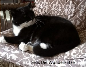 Housesitting Felix the wonder cat