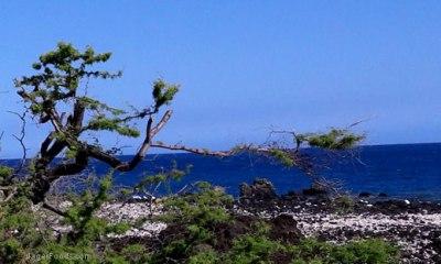 Care Takers At Mauna Kea HI