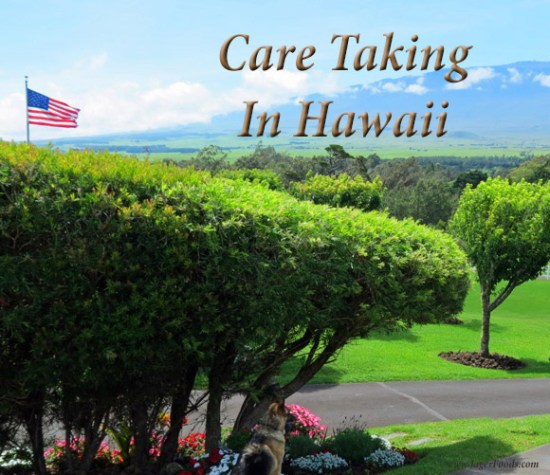 How to become a care taker in Paradise.