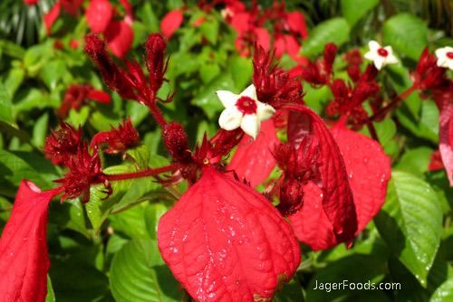 Flowers at Botanical Gardens in HI