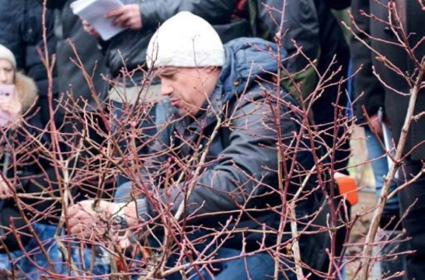 Правила обрезки голубики от белорусского эксперта