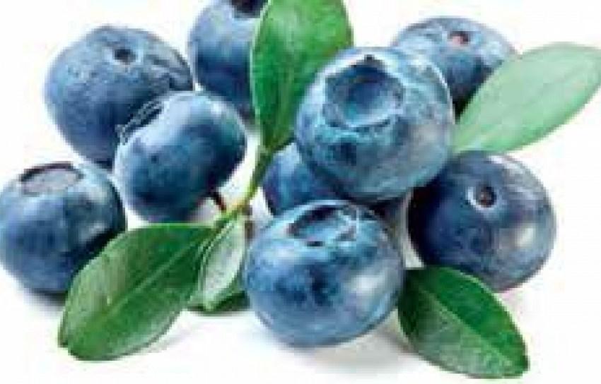 Голубику под ТМ «StarBerries» выращивают с учетом американских и голландских традиций