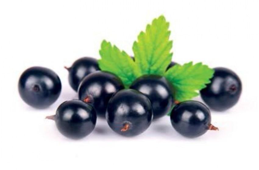Чорна смородина: нові виклики для північної ягоди