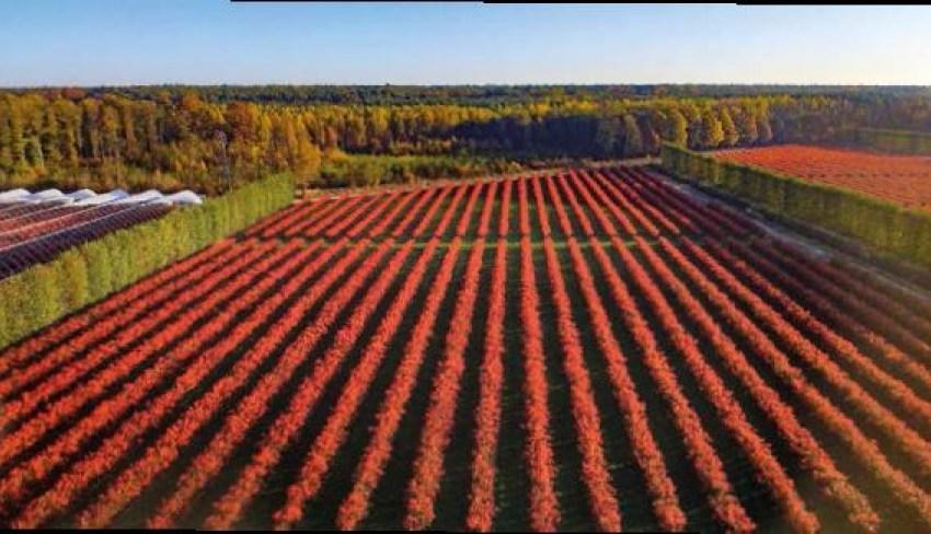 Don't panic – be organic: практичні поради для органічного бізнесу з власного досвіду – Павел Ваврищук, ТзОВ Polska Borowka