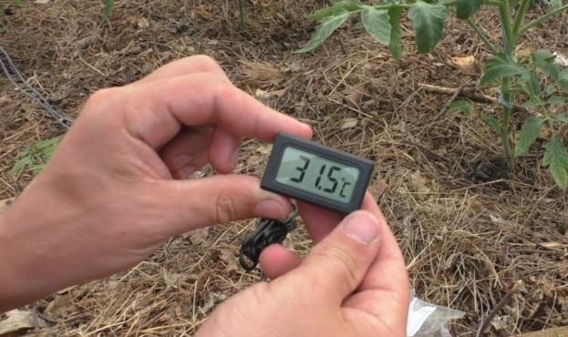 Український студент створив систему контролю мікроклімату у теплицях у рази дешевшу за промислові аналоги