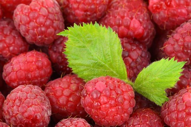 Не злякалися кризи. Полтавське ФГ «Диканські Ягоди» успішно вирощує та заморожує органічну малину на експорт