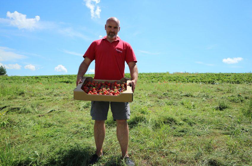 «Моє поле – це суниця по-простому», – Борис Карабанов, фермерське господарство «Агровест 2012»