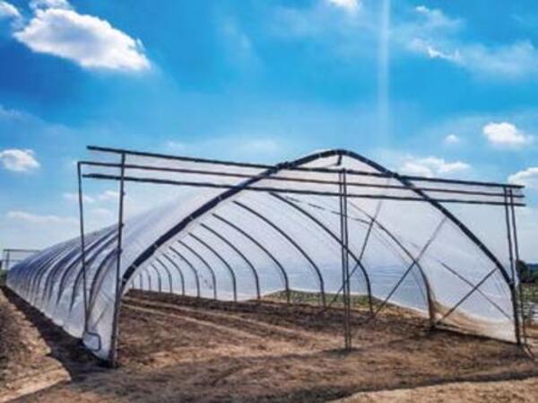 Експеримент: українська малина в тунелі Haygrove