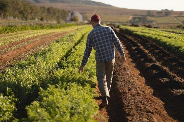 Верховна Рада підтримала законопроєкт щодо стимулювання фермерських господарств