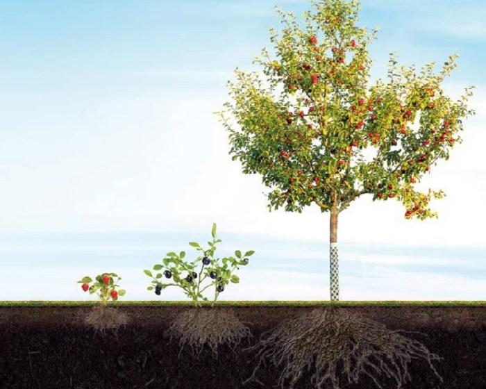 Добре функціонує коріння – буде врожай