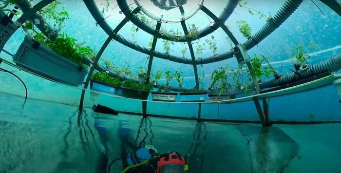 Суницю в Італії вирощують… під водою