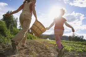 Сімейне фермерське господарство: особливості створення та діяльності