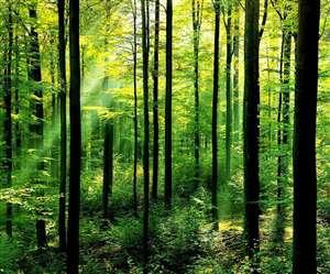तीन लाख करोड़ की पर्यावरणीय सेवाएं दे रहा है उत्तराखंड