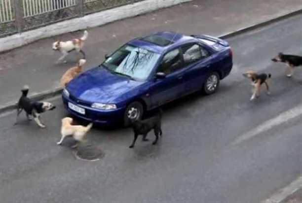 Image result for गाडी के पीछे भागता कुत्ता