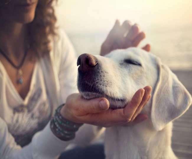 पालतू जानवरों के साथ बिताए सिर्फ 10 मिनट, दूर हो जाएगा आपका तनाव
