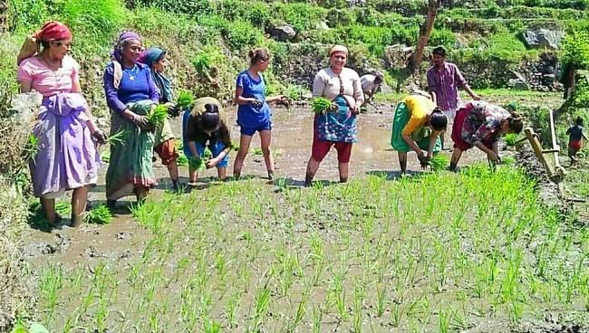 गांवों में लोकगीतों संग धान की रोपाई शुरू