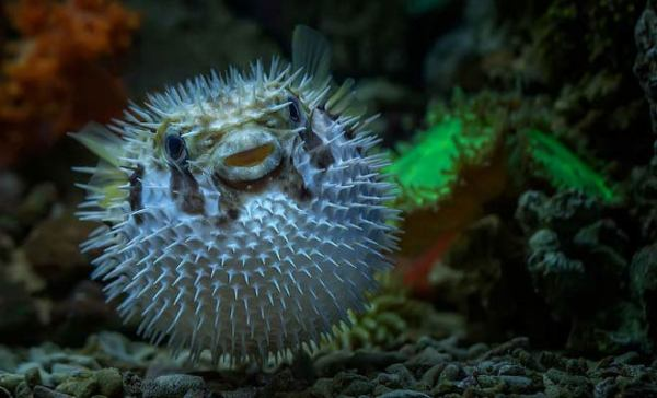 ये हैं विश्व के दस सबसे जहरीले जीव