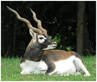 Black buck for UPSC civil service exam