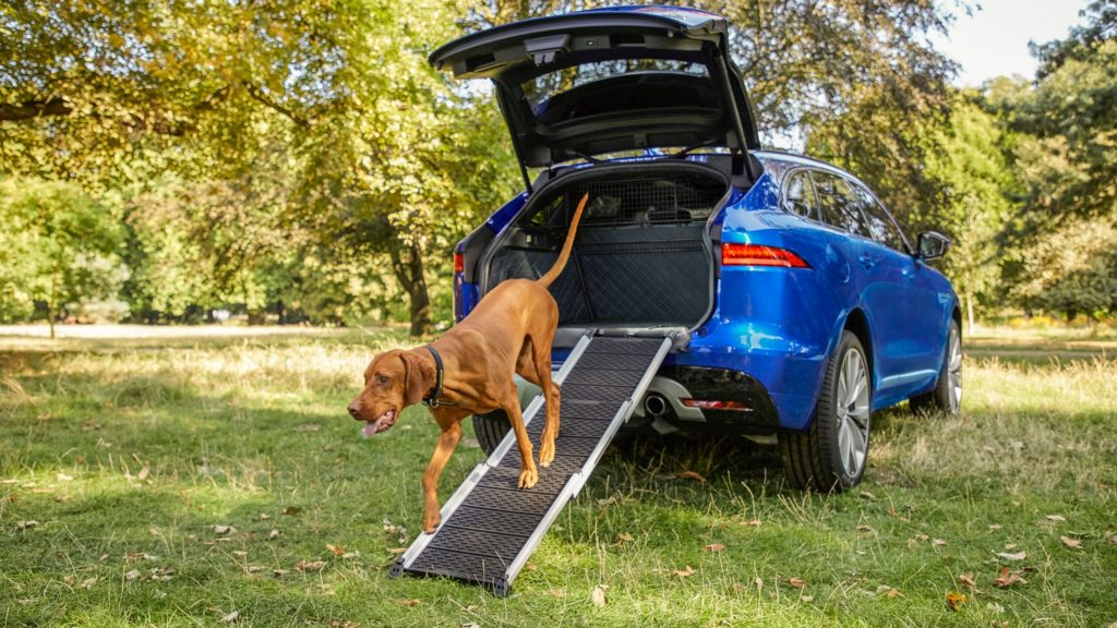 Jaguar Pampers Pooches with New Range of Pet Products