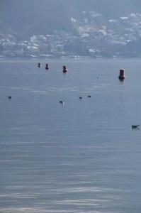 chenal des bateaux au lac