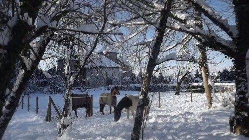 Chevaux sous la neige