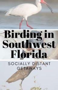 Pin me! Birding in Southwest Florida