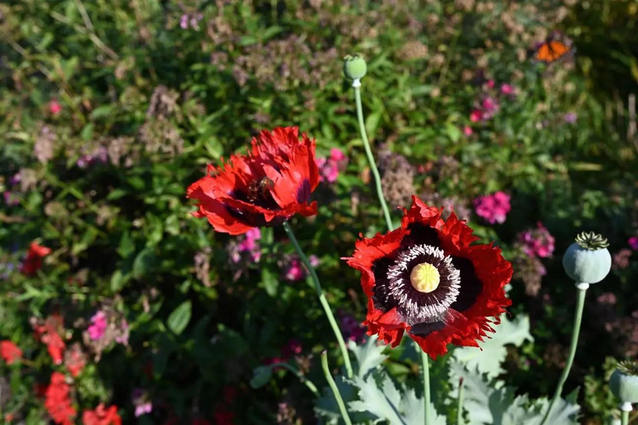 Garden Advice for the Newly Suburban Beginning Gardener