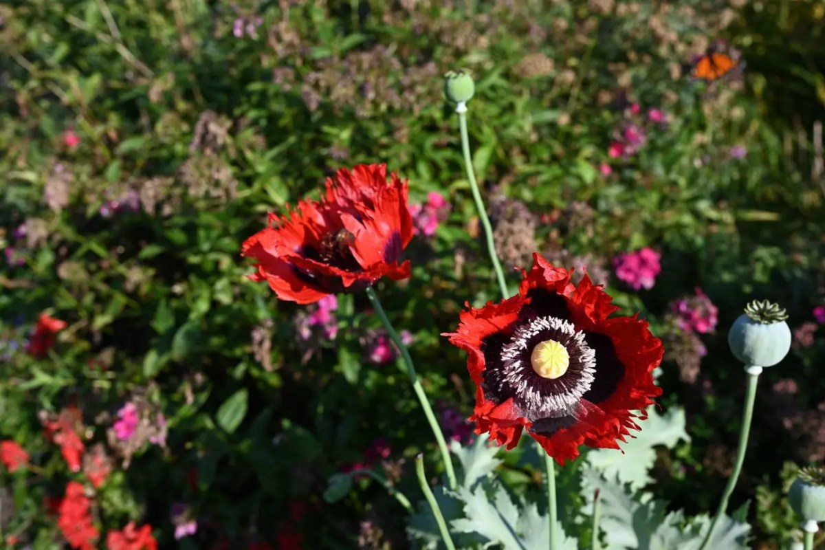 Garden Advice for beginning gardeners