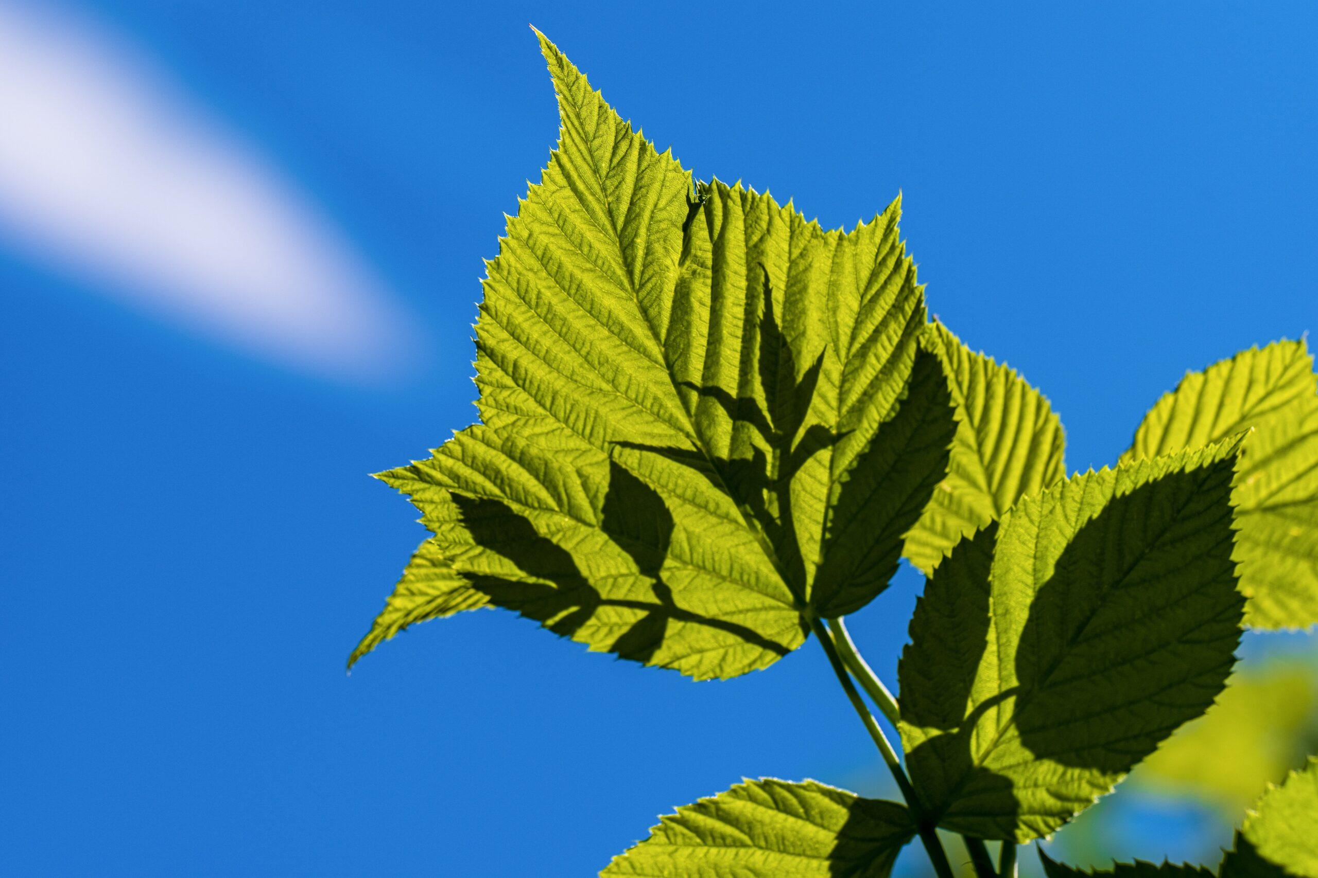 leaf 5383103 scaled