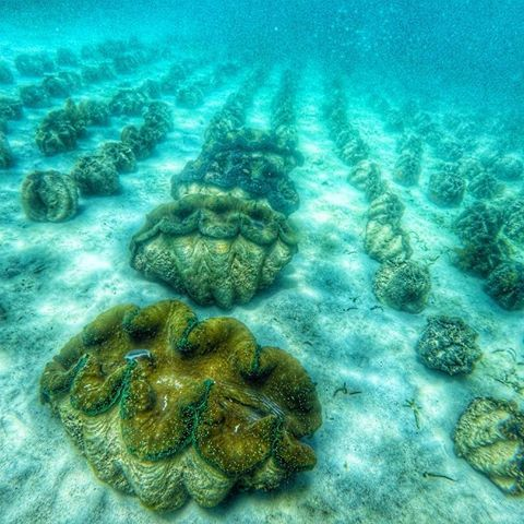 giant clams sanctuary