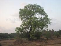jain_ruins_at_chandavara_4_20130701_1777415304