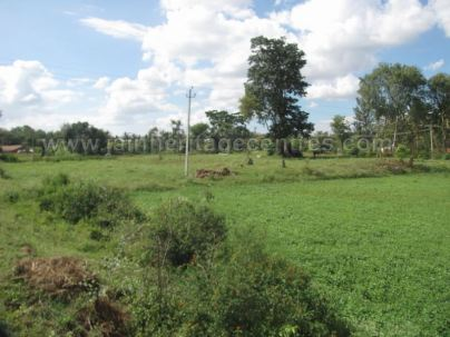 jain_ruins_of_kumarabeedu_mysore_district_karnataka_20131216_1676943996